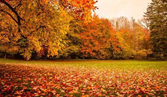Yapraklar Sonbaharda Neden Renk Değiştirir?