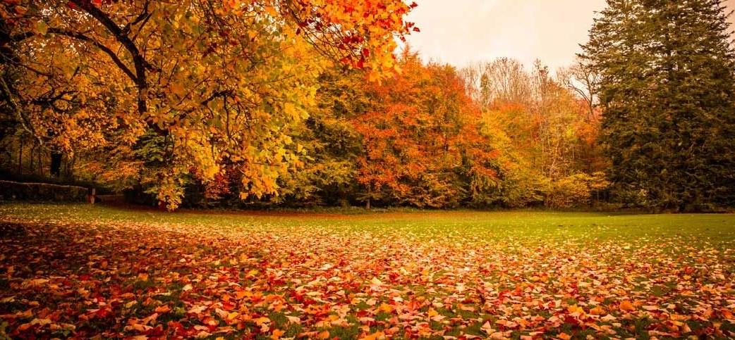 yapraklar sonbaharda Neden renk değiştirir