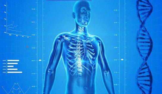 İnsan Vücudunda Kaç Kemik Vardır?