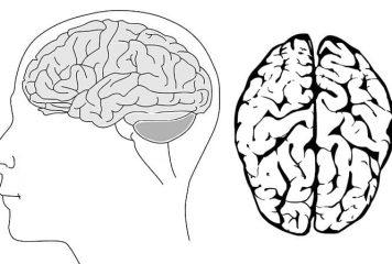 İnsan Beyninin Yüzde Kaçını Kullanıyor?
