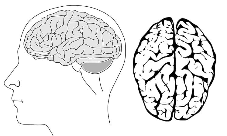 insan beyni kullanımı