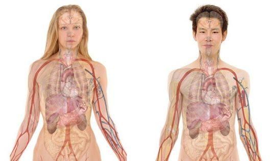 Anatomi Nedir? Anatomi Çeşitleri Nelerdir?
