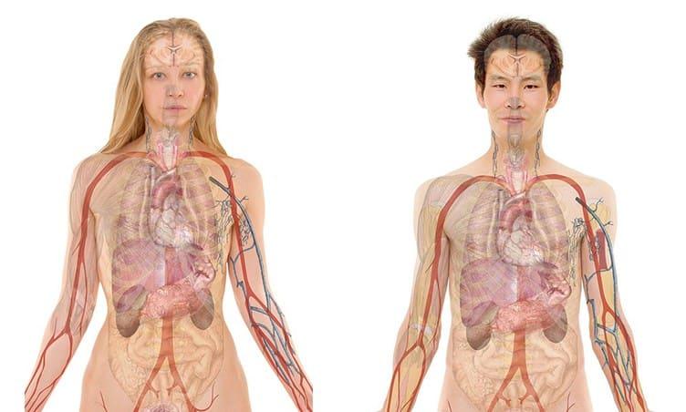 anatomi nedir