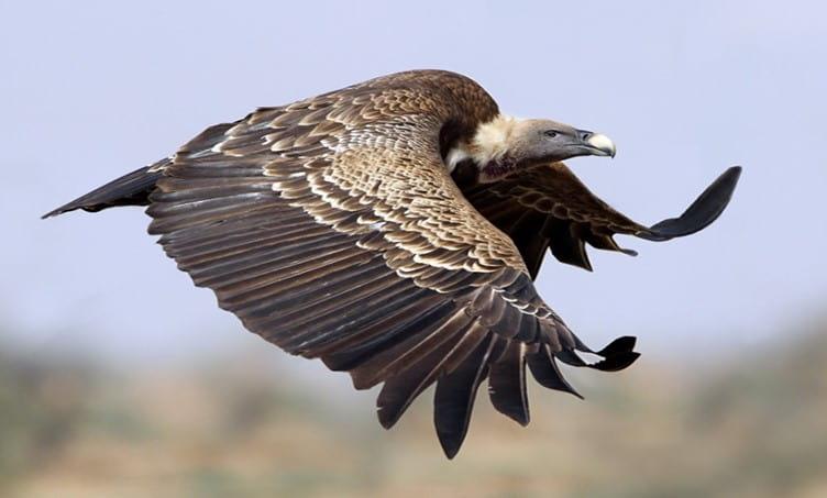 En Yüksekten Uçan Kuşlar