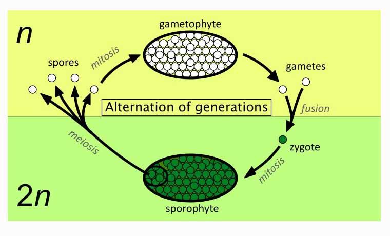Metagenez Nedir?