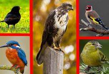 Ornitoloji Nedir