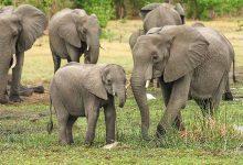 Filler Hakkında Bilgiler