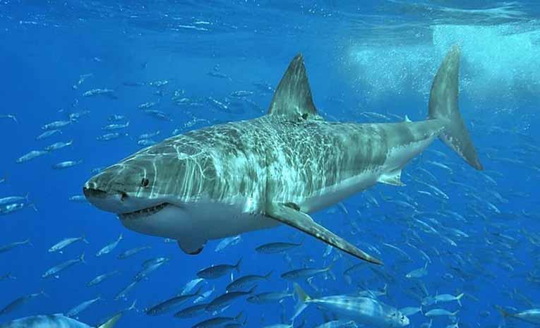 Köpekbalıkları hakkında bilgiler